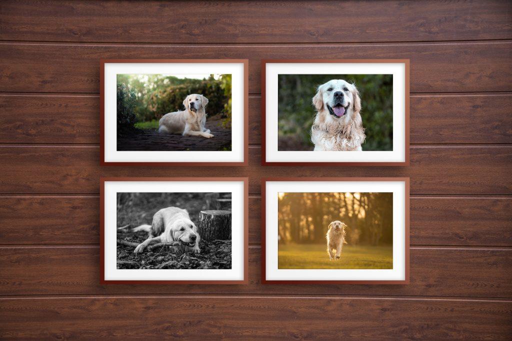 Dog Photographer in East Lothian Edinburgh