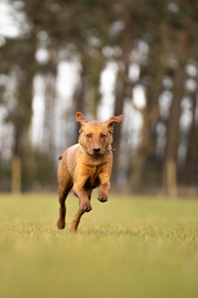 running dog photo
