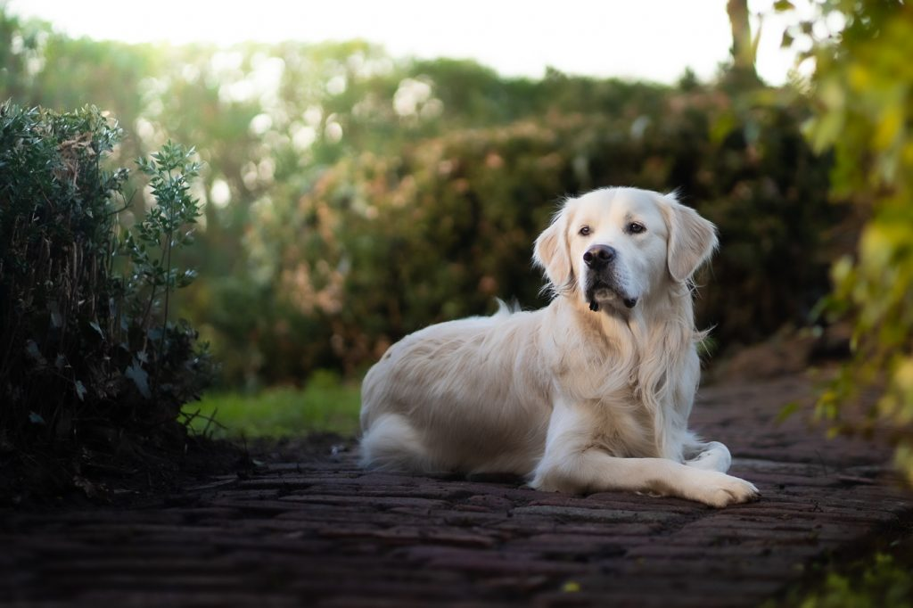 Dog Photography by Pupper Snappers Dog Photographers