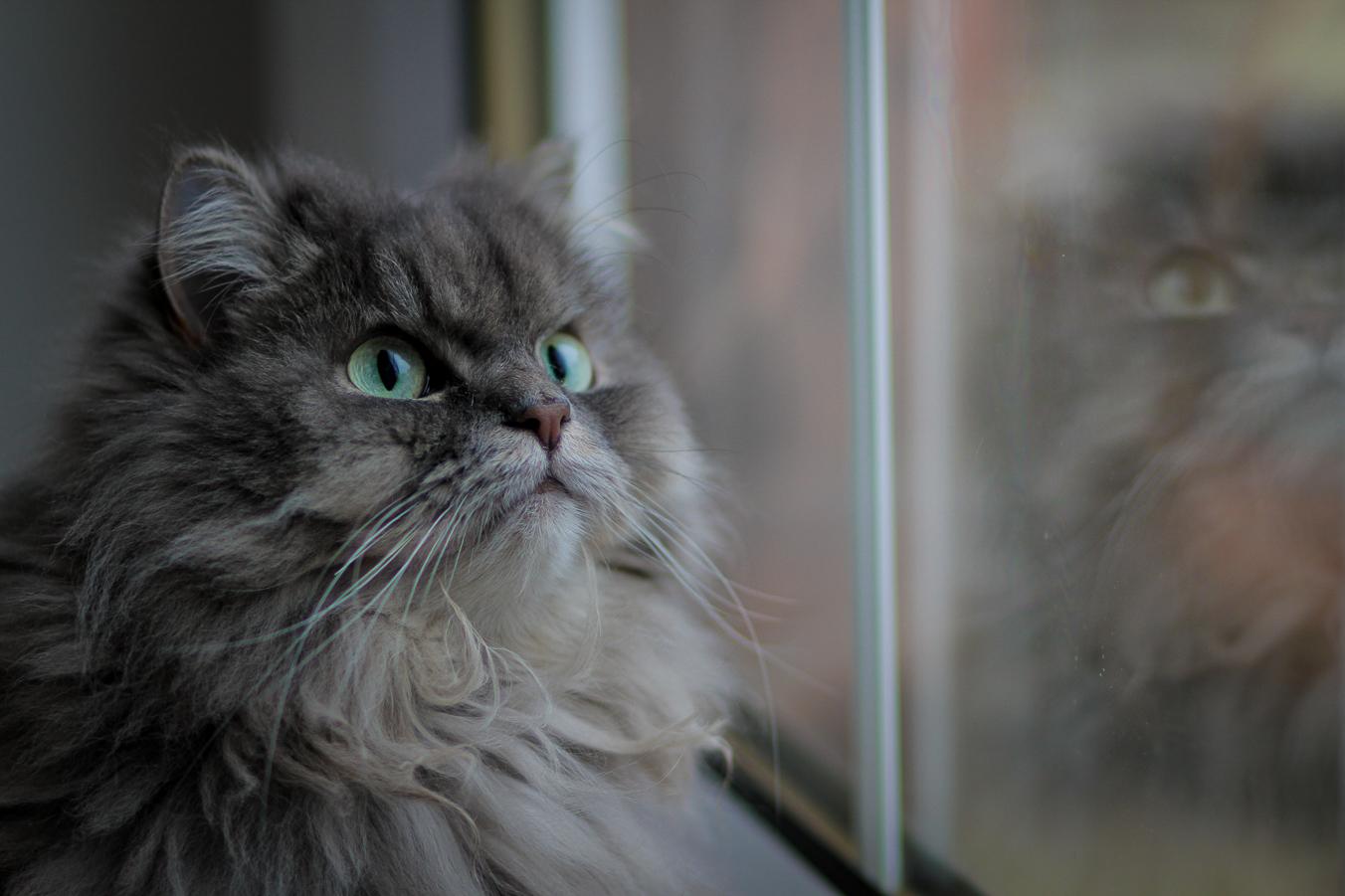 cat photographer