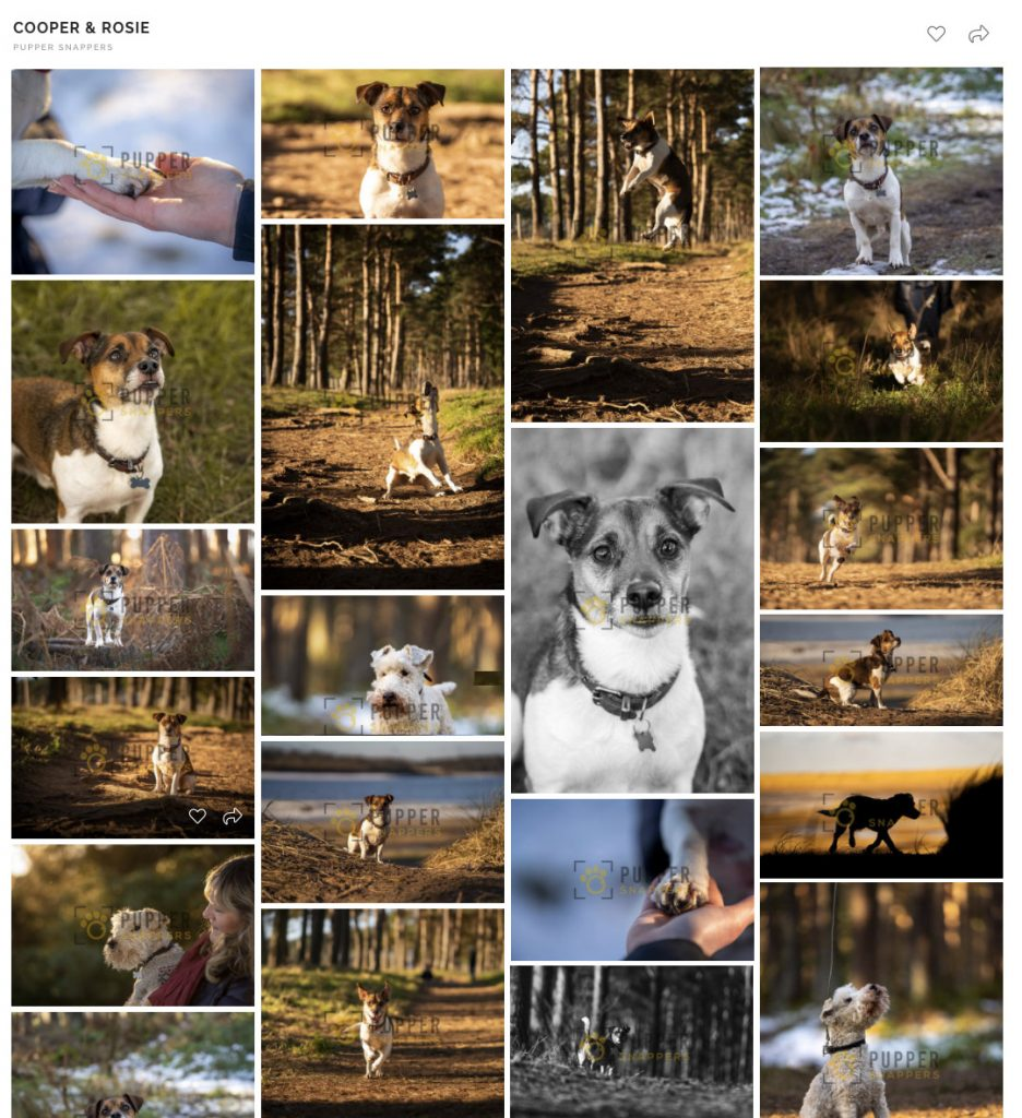 dog photography gallery
